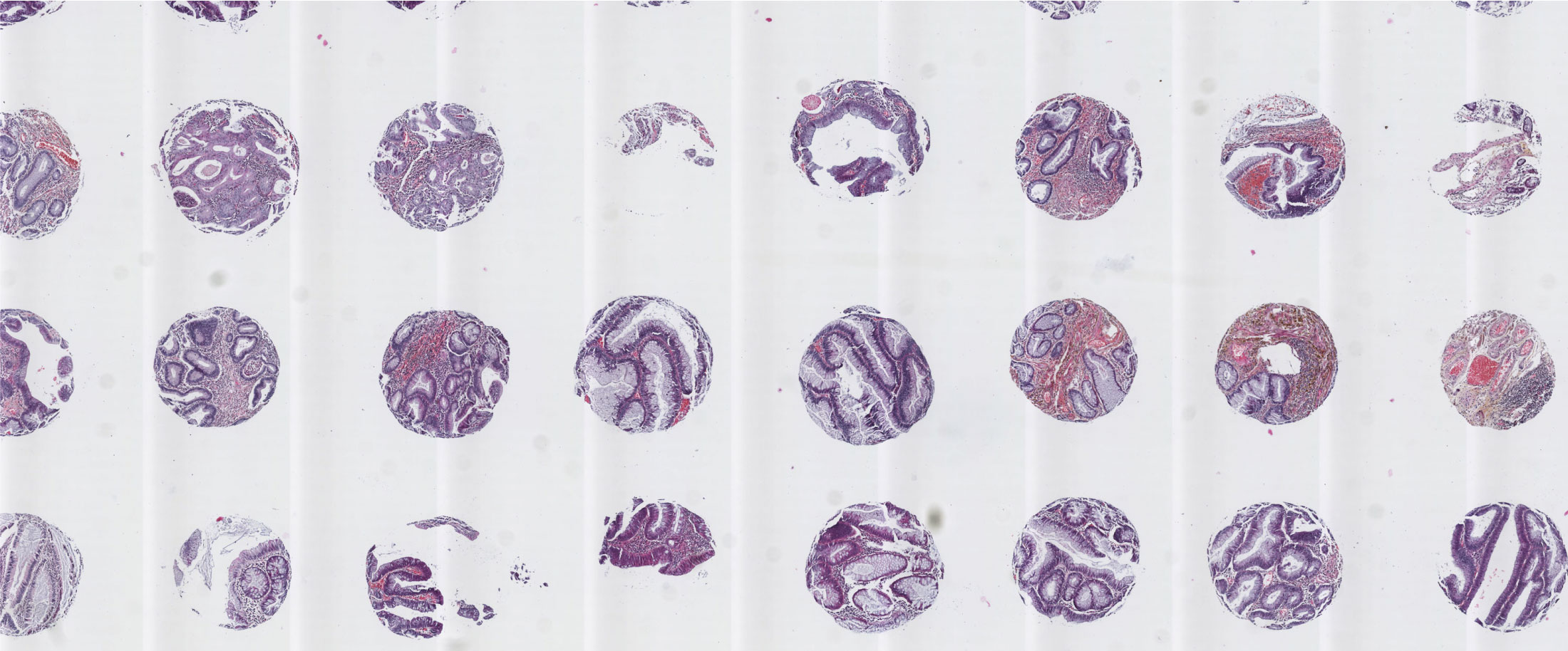 Histotechnologie