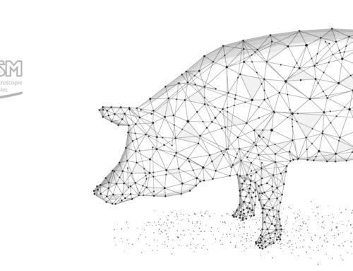 Impression 3D : Système stéréotaxique open source pour les porcs